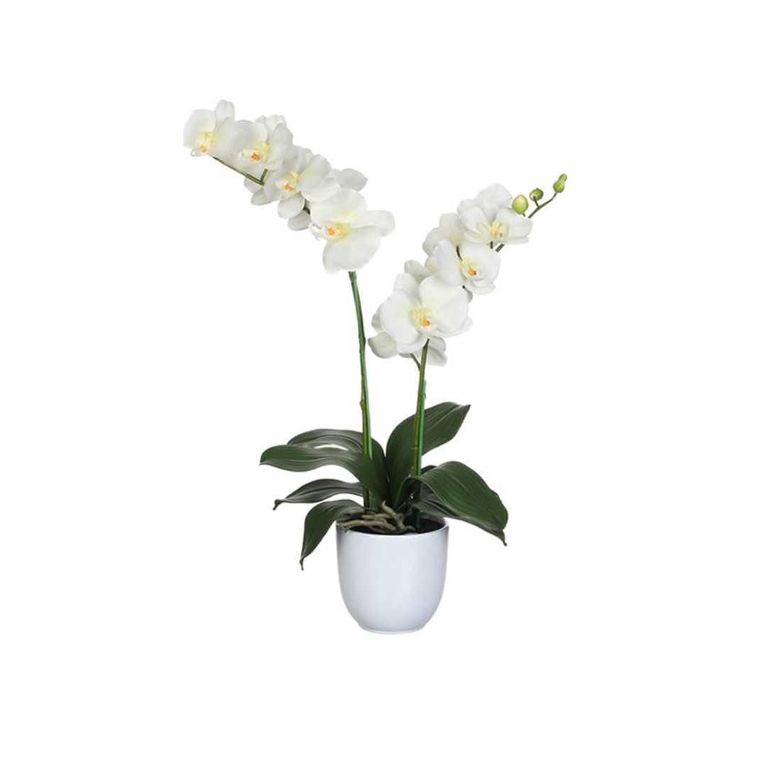 Orchidea Phalaenopsis Artificiale h c.a. 50cm shop online